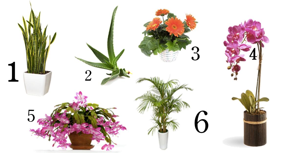 6 planten waar je beter van gaat slapen - Seriously Good