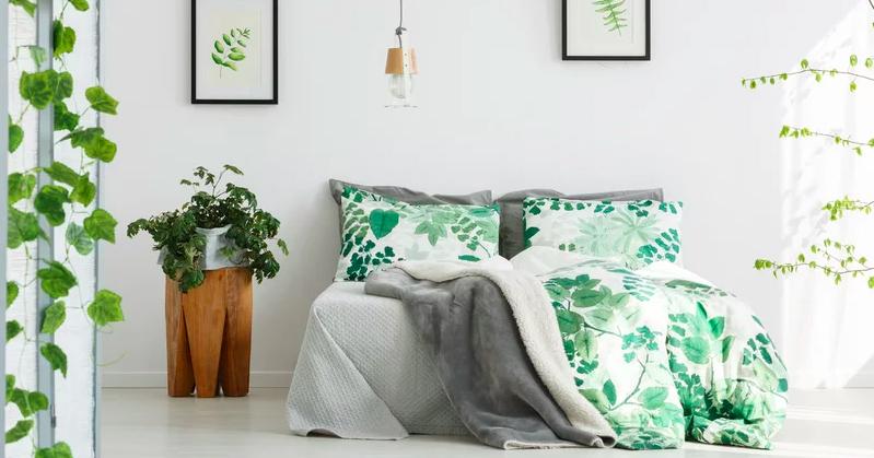 Zuiverende Planten Slaapkamer : Kamerplanten waar je beter van gaat slapen