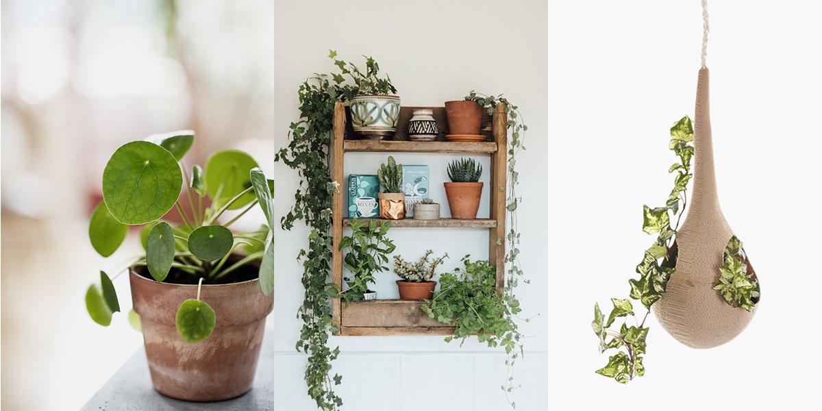 Inspiratie voor een urban jungle in huis