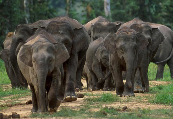 De Javaanse olifant - Foto: Mi Diario blog