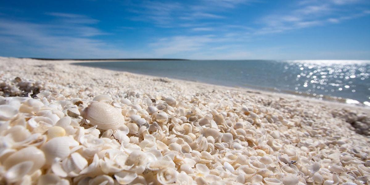 De mooiste stranden ter wereld: Shell Beach, Shark Bay