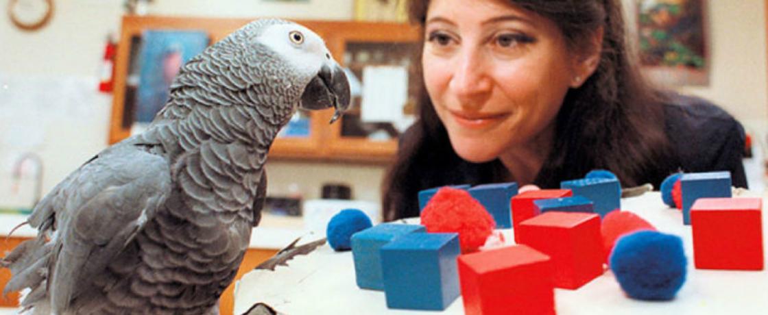 Dit zijn de slimste dieren ter wereld: Papegaai Alex