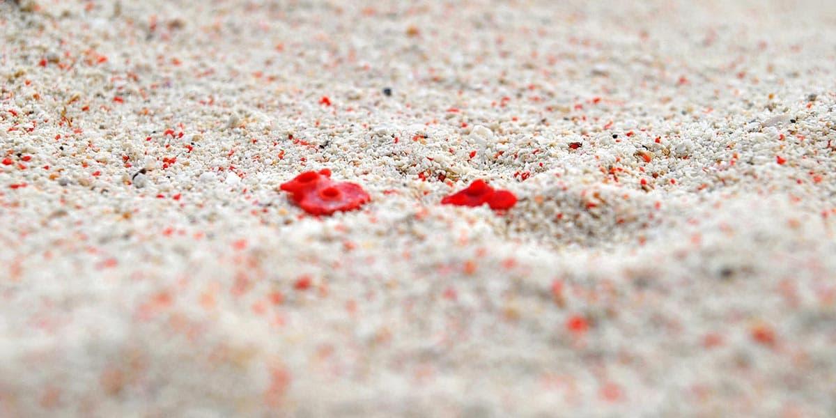 De mooiste stranden ter wereld: Pink Beach op het Isla Gran Santa Cruz, bij Zamboanga