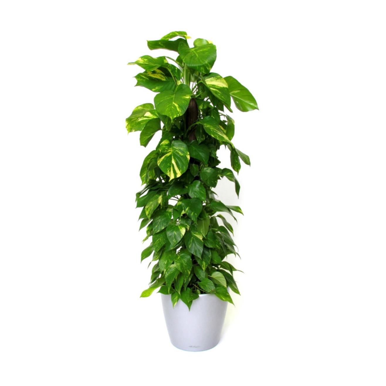 De 10 beste luchtzuiverende planten volgens NASA