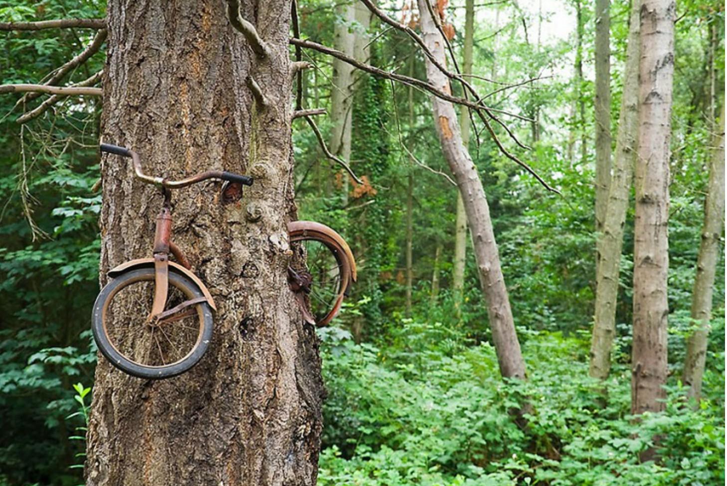 7X de natuur wint het van de mens en dat levert deze mooie beelden op, Washington