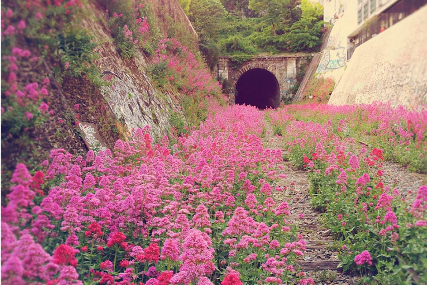 7X de natuur wint het van de mens en dat levert deze mooie beelden op, Parijs