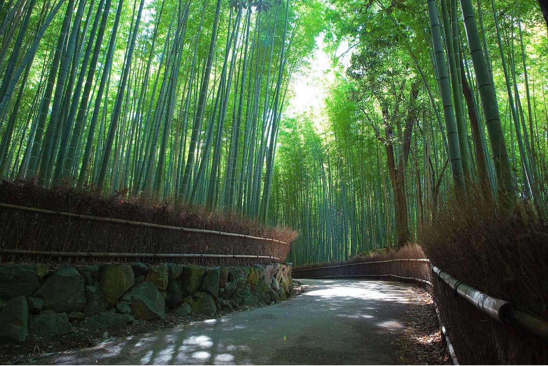 5 prachtige tunnels die door de natuur zelf zijn gemaakt - Bamboo path in Kyoto