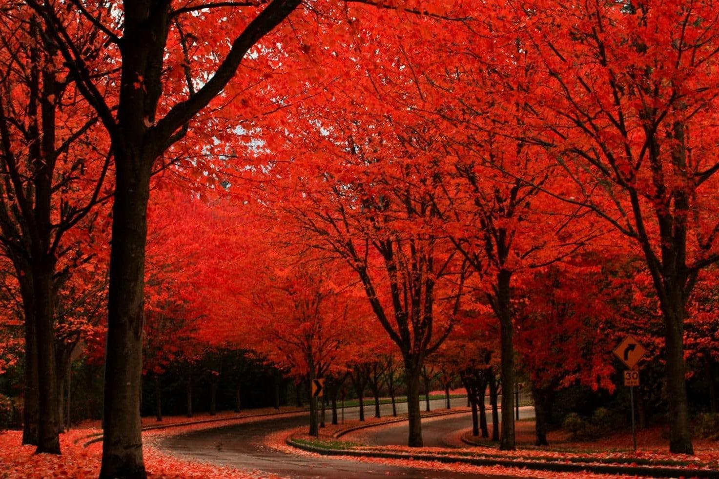 5 prachtige tunnels die door de natuur zelf zijn gemaakt - Maple trees in Oregon