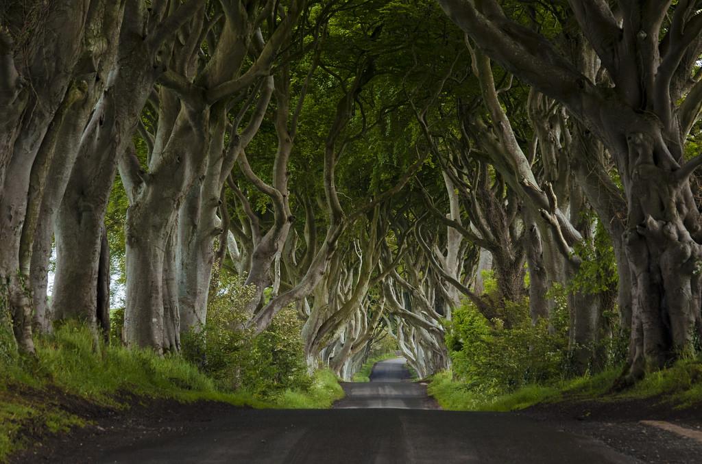 5 prachtige tunnels die door de natuur zelf zijn gemaakt - The dark hedges in Ierland