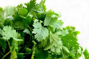 7 kruiden die goed voor je gezondheid zijn - koriander